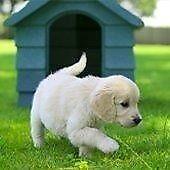 Guide Dogs For The Blind - Street Fundraiser - Leeds (OTE £14.70 per hour) (Immediate Start)