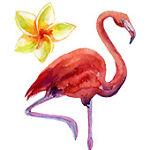 Flamingo Fabrics