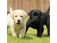 Guide Dogs For The Blind- Door to Door Fundraiser- Grimsby - £7.50-£8.50 Per Hour - OTE £22k - £30k
