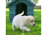 Guide Dogs For The Blind - Street Fundraiser - Newcastle (OTE £14.70 per hour) (Immediate Start)