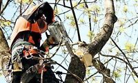 Tree Cutting Services in Edmonton & Area