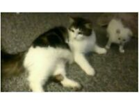 Missing cat from North Street, Bainsford, Falkirk since 23 Sept