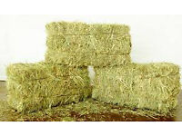 small square bales of hay, first class for horses or livestock