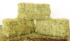 Wanted: Horse Hay