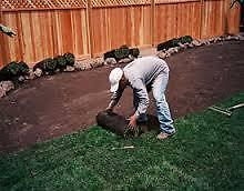 Calgaries Quickest & best Priced Sod Laying Firm , Call us today