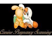 Canine Pregnancy Scanning West Midlands