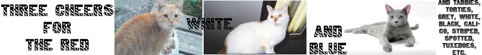 KittyVista LLC