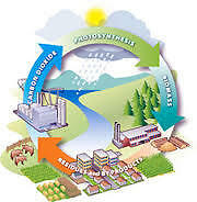 CHP Biomass Power Systems
