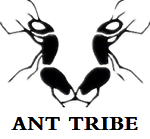 ANT KING OUTDOOR GEAR