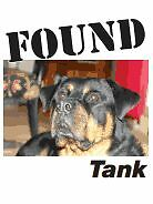 Lost and Found Pets in Grey-Bruce Facebook