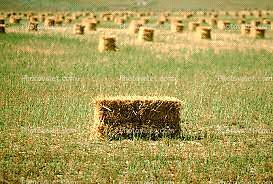 ISO STRAW BALES OR 1 ROUND
