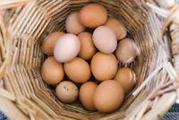 100% Natural/Free Range Farm Fresh Chicken Eggs