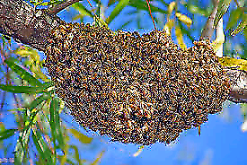 Bee Swarms Collected free