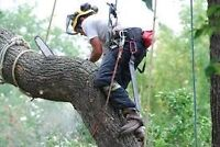 Tree Removal - Certified Arborist