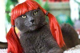 KittyKatsBounceHaus