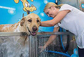 Do it yourself dog wash adopt or rehome pets in ontario kijiji 999 dog wash solutioingenieria Image collections