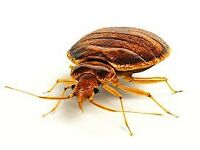 Pest Control Service - Guaranteed Service at a low price - Call us now on 02085198992