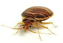 ESCO Pest control .$80 summer special see my page for more.. Paddington Eastern Suburbs Preview