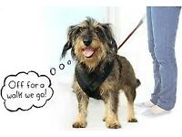 Doggy Daycare & dog walking service (three hours for £20)