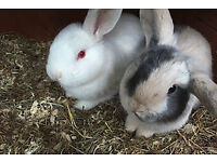 Rabbit/Bunny and other small pets boarding, rabbit hotel hostel resort accomodation holiday