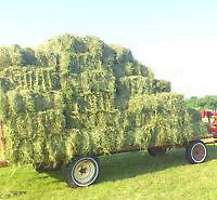 Fabulous 1st cut hay for sale - timothy/alfalfa mix