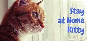 Cat Sitting Service in KW area