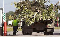 Tree branches junk removal same day service