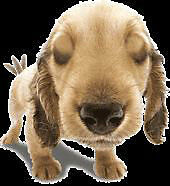 Canine Critters Dog Walking Services - fun, dog-oriented