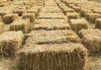 Straw / Hay Bales