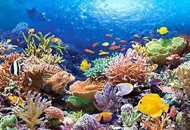 Reef Garden Supply