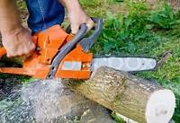 TREE REMOVAL - 25% off until MAY 4