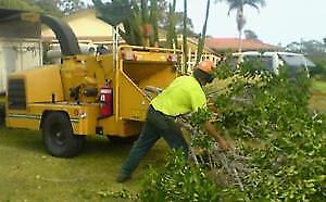 Best Priced Tree And Stump Removal Service.