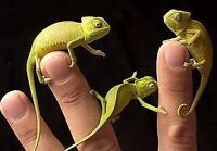 Reptile and Small Animal Petsiting! Low Rates!