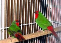 Birds Inc Is a Full line exotic Bird Rescue and Full line avairy