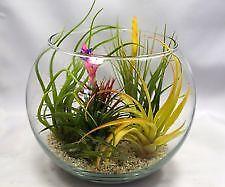 Plant Terrarium Ebay