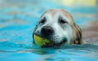DIFFICULT DOG TRAINING & PET SERVICES - 705.735.1565
