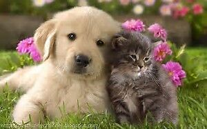 Personalized Pet and House Sitting Packages
