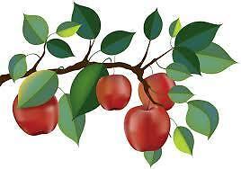 Apple Season Collectibles