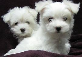 10 Years - Experienced House/Pet Sitter Subiaco Subiaco Area Preview