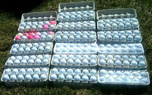 $3.00 a Doz for Name Brand Golf Balls