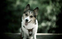 Dog walkers, Cat sitters, OUTAOUAIS area - occasional