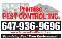 PEST CONTROL AT LOWEST PRICE