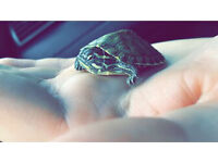 Baby turtles for sale
