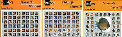 AQUALOG, 3 Discus Fold Posters, for Discus fans! for sale  Shipping to India