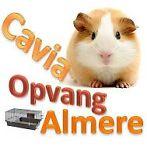 Caviaopvang Almere