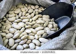 2 Fasolia Gigantes seeds wanted; for growing.