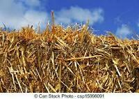 BARLEY/WHEAT STRAW FOR SALE IN LARGE BALES IN COALDALE