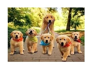 Experienced dog walker stourbridge area