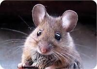 Expert en souris et capture d,écureuil