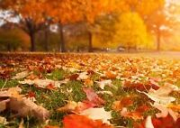 Fall cleaning & lawn care